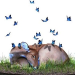 Josh Keyes and the Soul of the Earth