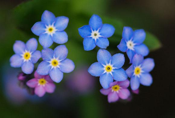 Balakov - Not forgotten Non ti scordar di me - fiori
