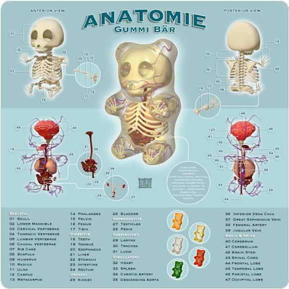 Jason Freeny - Anatomie Gummi Bär