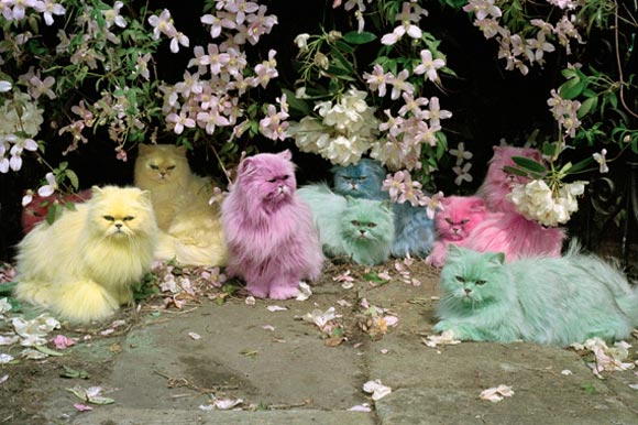 Tim Walker - Pastel Cats / Gatti color pastello