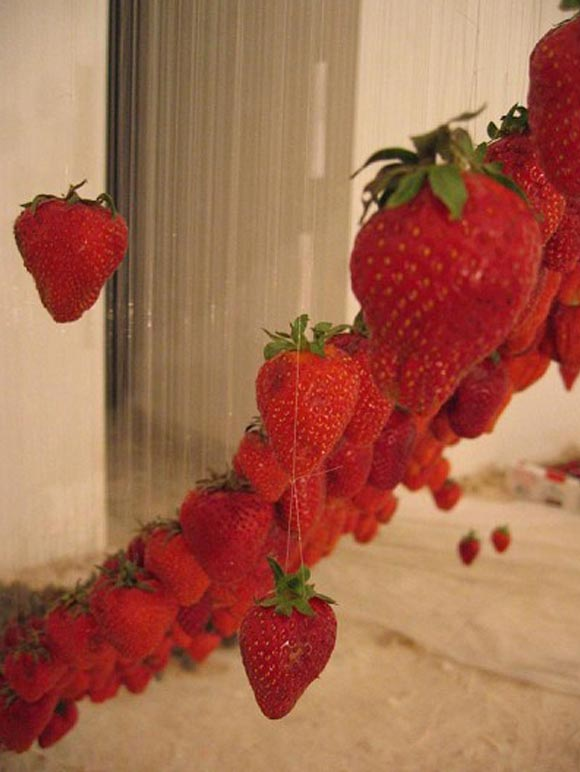 © Claire Morgan - Untitled, strawberries and ice, fragole e ghiaccio, 2003