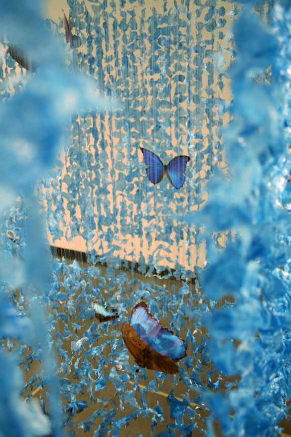 © Claire Morgan - The Blues (II), blue feathers and butterflies, piume blu e farfalle , 2009