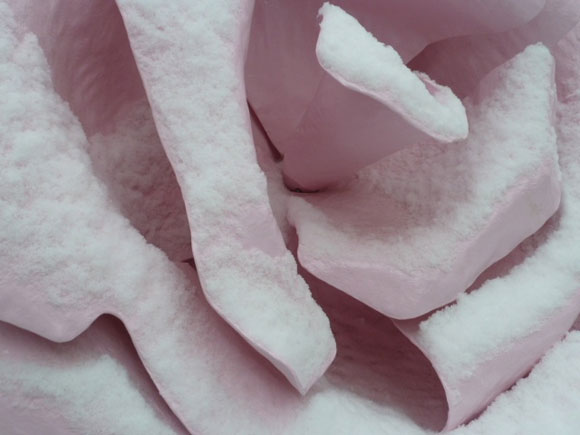 Will Ryman, The Rose, Giant Installation and Sculpture - La Rosa, Installazione e Scultura Gigante