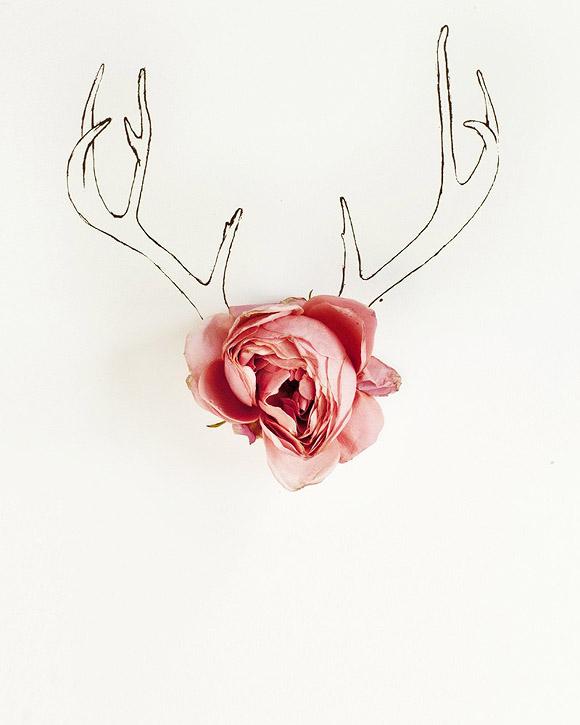 Kari Herer - Antler Illustration and Flower Photography