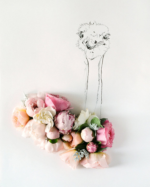 Kari Herer - Ostrich Illustration and Flower Photography