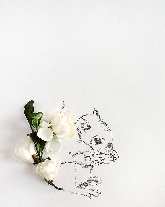 Kari Herer - Squirrel Illustration and Flower Photography
