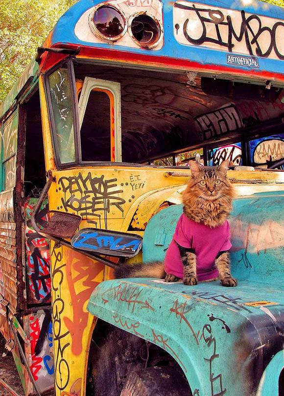 Cat Art Show, 101/exhibit